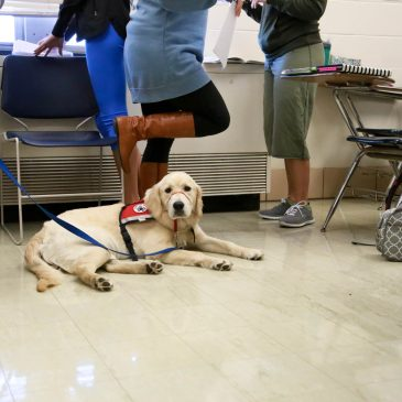 photo of service dog in class
