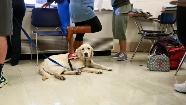 How To Train A Service Dog On A College Campus